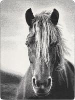 "Biederlack Wohndecke ""Animal Love"" - Silver"